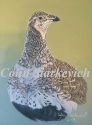 "Female Greater Sage Grouse (7 by 5"" acrylic on gessoboard) In Private Collection"