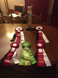 Rosettes and Kelsies Showmanship Trophy from M0-Kan
