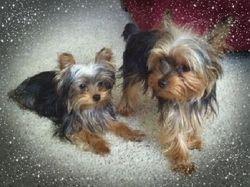 Mia with Bentley, her Mother