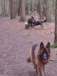 Sandhurst Dog Walker