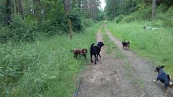 Forest with Tess, Buddy and Herbie and Heston lurking in the background