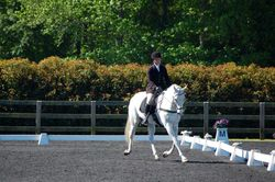 Jack in dressage at Poplar May HT