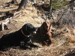 Jasper with her buddy, 2006