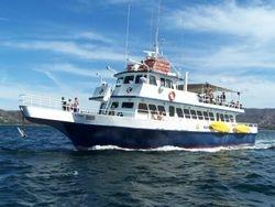 Mapache ferry