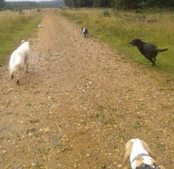 Enjoying a run