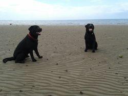 Jasper & Reuben