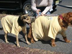 ALD Dogs