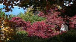 Red leaves - Female/female consortship