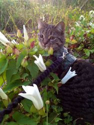 Willow Taking Time to Smell Flowers