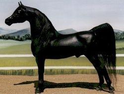 TS Black Velvet