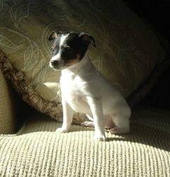 A very cute baby girl - Dec 2004 puppy