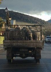 Sheep Truck
