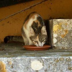Clinic cat