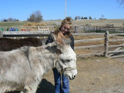 Glenda giving Lucy donkey some Reiki energy.