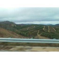 Christmas Tree Farm in NC Mountains