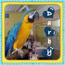 Darby=pending adoption