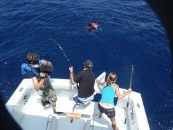 Marlin on Hawaii