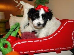 Mischief December 2010