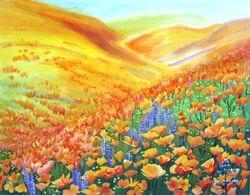 Golden Poppies Field In CA