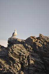 23. L'oiseau au rocher.