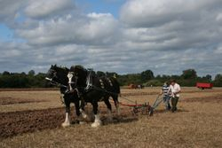 Heavy Horse ploughing