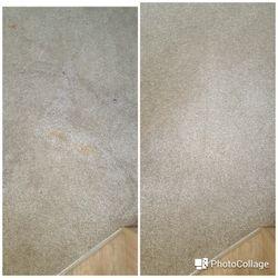 Carpet - food