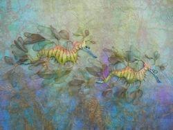 """"""" Leafy Sea Dragons """""""