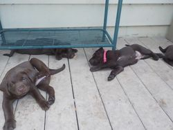 Played out (Maya, Willow and Hazel)