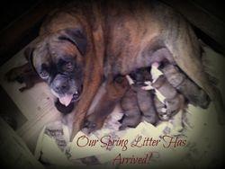 Tessa with her final litter...