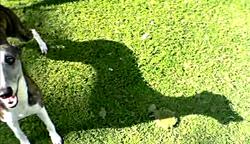 """""""The Shadow""""  Koko"""