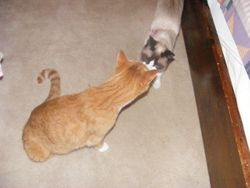 Gus and Bodhi smouching! Watch out Gus Bond might get jealous!!!
