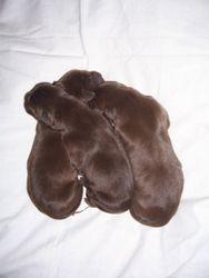 3 Males - Just Born