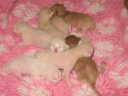 3 days old