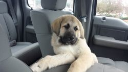 Leo off to his new home!