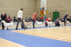 A Special Puppy Walk was held at Lunchtime for Puppies 4-6 Months