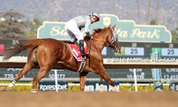 California Chrome wins the Awesome Again Stakes