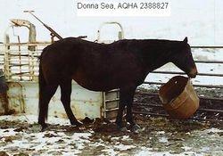Donna Sea
