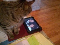This is one smart cat!