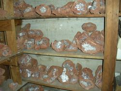 Fluorescent Barite Nodules with Calcite and Celestite