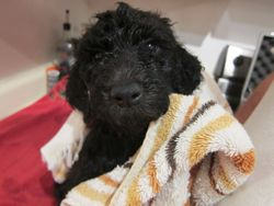 Niall after a bath.  6 weeks old.