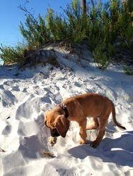 Flo on the beach