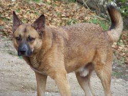 1 Dec 09 - Bigdog