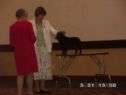 Meme had the honor of winning one of the four Awards of Merit at the Schipperke National Specialty in 2006.