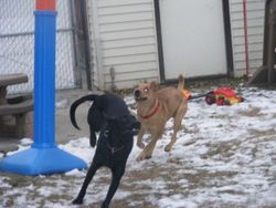 Dakota and Caidence having lots of fun!