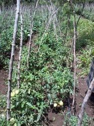 Gardening in Ogembo, Kenya 2018