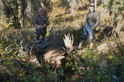 Mike Gleason's Moose