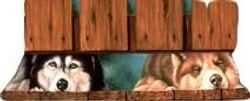Siberian Huskies looking under fence.
