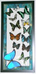10x20 Black shadowbox frame with blue edge mat