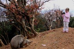 Never too early to start field primatology... (Arashiyama, central Japan, December 2015)