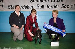 Winning baby Puppy in Show